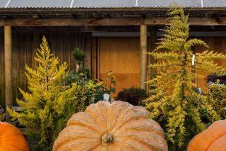 Skagit Valley Giant Pumpkin Festival