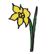 daffodil_1