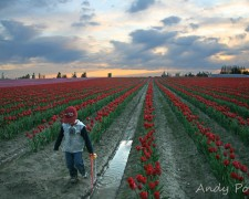 skagit_valley_tulip_festival_kids
