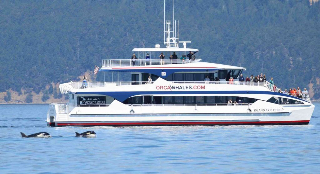 whale_watching_orcas